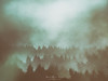 Fangorn (Mimadeo) Tags: background tree trees forest grunge grungy textures old vintage antique retro abstract dirty fog light textured mist wallpaper art foggy decorative toned scene pine park environment wilderness evergreen forestry wild dreamy ethereal mystery mysterious