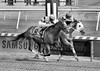 "2017-06-30 (62) r6 Victor Carrasco on #8 Vision of Green over Jorge Perez on #3 Royal Mile - monochrome (JLeeFleenor) Tags: jockey جُوكِي jinete dżokej jocheu คนขี่ม้าแข่ง jóquei žokej kilparatsastaja rennreiter fantino 기수"" жокей jokey người horses thoroughbreds equestrian cheval cavalo cavallo cavall caballo pferd paard perd hevonen hest hestur cal kon konj beygir capall ceffyl cuddy yarraman faras alogo soos kuda uma pfeerd koin حصان кон 马 häst άλογο סוס घोड़ा 馬 koń лошадь photos photography md maryland marylandhorseracing marylandracing outside outdoors"