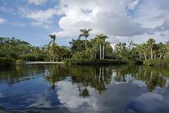 tropical paradise at the zoo (ucumari photography) Tags: ucumariphotography naples florida zoo january 2018 dsc5878 palm tree