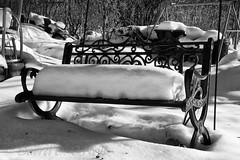 Bench Cushions 6 (LongInt57) Tags: snow winter cold weather season bench yard garden bw monochrome black white grey gray kelowna bc canada okanagan