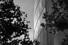 London building (spencerrushton) Tags: spencerrushton spencer rushton 5dmkiii canon5dmkiii 5dmk3 canon canonlens canonl manfrottotripod manfrotto beautiful blackandwhite black bw white monochrome 24105mm canon24105mmlf4 1635mm widelens wide autumn uk londonuk cityoflondon londoncity sumerinthecity building abstract raw lightroom light dark walk wood reflection windows glass