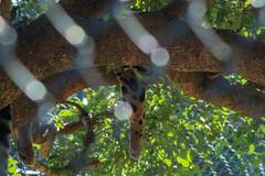 IMG_0420 (LeahDelPhotography) Tags: zoo zoophotography animalphotography animalphotographer exoticanimals naplesflorida florida wildlifephotography wildlife wildlifephotographer animals endangeredanimals