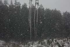 beneath the veil of winter's face III (Mindaugas Buivydas) Tags: lietuva lithuania color winter january snow snowstorm blizzard tree trees pine mood moody paneriaiforest paneriųmiškas mindaugasbuivydas forest
