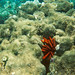 Pencil Sea Urchin Hawaii Maui Honolua Bay? 95-16- 14 8.3.95 Underwater 6