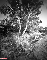 Waiting for sunset (DelioTO) Tags: 4x5 autaut beaches blackwhite canada d23 desaturated f175 fomapan100 lake landscape ontario pinhole trails trip winter