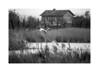Camargue-5719 (helenea-78) Tags: camargue oiseau oiseaux flamants rose flamantsroses marais eau etang nature maison noirblanc noiretblanc blackwhite blackandwhite
