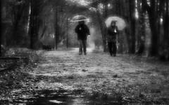 It's Raining, It's Pouring (Anne Worner) Tags: anneworner olympus em5 lensbaby velvet56 f16 manualfocus manualfocuslens street streetphotography bw blackandwhite nik silverefex norway fyllingsdalen raining umbrellas wet