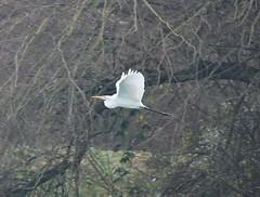 On Air (Hugo von Schreck) Tags: hugovonschreck reiher heron bird vogel canoneos5dsr tamronsp150600mmf563divcusda011
