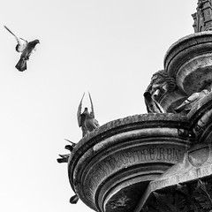 They say any landing you can walk away from is a good one. Alan Shepard (druzi) Tags: blackandwhite biancoenero noiretblanc bw bn bird pigeon piccione fountain fontana greyscale scaladigrigi grigio cielo sky flying landing volare atterrare planare approdare ali wings water square