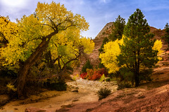 Dry Creek Bed (jthight) Tags: autumn stgeorge landscape pine canyon nationalpark mountains landform photoshop fall rocks nikond810 afzoom2470mmf28g creek trees fallcolors cottonwood clouds roadtrip pinecreek usa sky october unitedstates zionnationalpark lightroom utah beautiful