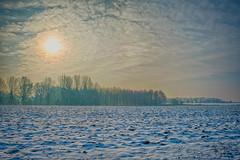 Just before the thaw (enneafive) Tags: landscape snow thaw sun wood land bucolic blue yellow fujifilm xt2