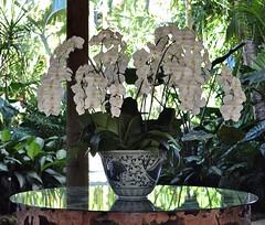 Centerpiece (ACEZandEIGHTZ) Tags: orchids white phalaenopsis vase table nikon d3200 centerpiece floral garden
