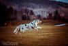 💕 Das Leben besteht nicht aus den Momenten in denen wir atmen, sondern aus denen, die uns den Atem rauben 💕 (Nana-Photography) Tags: australianshepherd aussie nature animals animalphotography nanaphotography carinthia dog blue