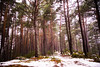 Winter forest (Sofia Ortun) Tags: winter snow forest bosc bosque engolasters nature wildlife naturaleza natura arboles arbol tree trees canon 6d forestimages andorra