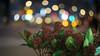 Ernst Leitz Wetzlar Summar 5 cm f/2 - DSCF4894 (::Lens a Lot::) Tags: ernst leitz wetzlar summar 5 cm f2 1935 | blades aperture ltm mount paris 2017 flower plant weed close up closeup bokeh depth field light night color flare vintage manual german fixed length prime lens west germany profondeur de champ effet nature flou extérieur wow fleur plante macro jardin prairie