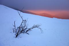 Sunrise (denismartin) Tags: denismartin sun cloud sunrise hohneck routedescretes lorraine alsace winter weather snow light forest mountains vosgesmountain vosges vogesen tree trekking