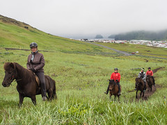 On the slopes of the Eldfell volcano, Heimaey, Westman Islands (ceeko) Tags: 2015 heimaey iceland olympusem5 vestmannaeyjar westmanislands farmanimals horses mist riding