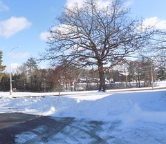 one big summer tree in winter (search4agape1) Tags: trees snow park