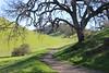 Borges Ranch, Walnut Creek (New York Big Apple Images) Tags: borges ranch walnutcreek contracosta california park farm