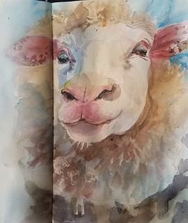 Sheep sketching