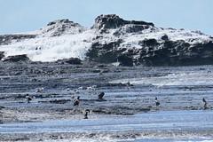 Beneath the cascade (Karlov1) Tags: seabirds feeding