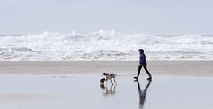 Walking Buddies... (Bruus UK) Tags: mawganporth cornwall walking dogs beach shore sand swell waves rollers rough beachlife exercise dalmation dachsund girl striding buddies marie coast storm reflection whitewater surf water atlantic stormy