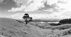 Coromandel Peninsula (tewahipounamu) Tags: bay coast coromandelpeninsula neuseeland newzealand tree waikato