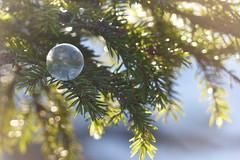 Bubble&Ice drop (evisdotter) Tags: bubble icedrop såpbubbla frusen frozen winter macro light bokeh sooc