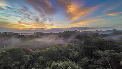 Une belle journée commence (alain_did) Tags: sunset sun jungle forêt forêtamazonienne rainforest guyanefrancaise saintlaurentdumaroni hellosaintlau arbre cielbleu reflets paysage brume matin laube