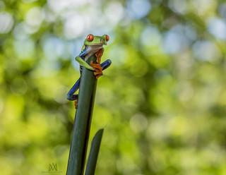 happy bokeh frog