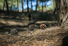 Un paseo por el bosque (JuanCarlossony) Tags: piña pinos gente perro sony 50mm slta58