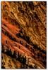 Fire and fury (tiggerpics2010) Tags: yellowstone