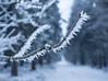 Icy (KalleKrabowsky) Tags: winter forrest taunus hohe wurzel