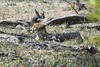 Guépard - Cheetah (Judith Lessard) Tags: afrique africa afriquedusud southofafrica kruger parckruger krugerpark guépard cheetah