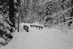Sentier de neige (ValMi2012) Tags: bois neige raquette sentier canada québec forêt pont hiver wood snow snowshoe trail bridge winter holz schnee schneeschuh brücke madera nieve rastro puente invierno legno neve ciaspole sentiero ponte inverno
