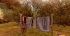 Photocontest Whimberly (catarina.sharktooth) Tags: laundry whimberly ham happyassmonday monday nature portrait