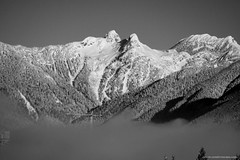 Snow day in black and white. (Zorro1968) Tags: snowday blackandwhite photos604 snow weather bcstorm explorebc explorecanada lifeincanada pacificnorthwest yourshotphotographer vancouverisawesome globalbc ctvvancouver