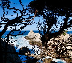 Looking Through Branches Cliffside at Point Lobos, California (Seymour Lu) Tags: gh5 dcgh5 mirrorless panasonic lumix highway1 pacificocean pacific westcoast coast western carmelbythesea carmel california pointlobos hiking peeking branches edges cliffside cliffs rocks mountains peaks waves crashing blue oceans water
