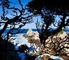 Looking Through Branches Cliffside at Point Lobos, California (Seymour Lu) Tags: gh5 dcgh5 mirrorless panasonic lumix highway1 pacificocean pacific westcoast coast western carmelbythesea carmel california pointlobos hiking peeking branches edges cliffside cliffs rocks mountains peaks waves crashing blue oceans water