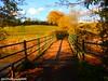 Changing 🍁 (DCPhotography2000) Tags: light shadow bridge beautiful uk nikon europe golden bright river clouds