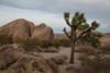 Desert_Road_Trip-4871 (smithjustind) Tags: arizona newyears2018 roadtrip robyn