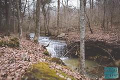 Week 9: Wanderlust (bmurphy502) Tags: woods kentucky winter waterfall wanderlust walk wasser water natur nature plants tree