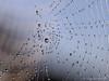 Spider's Galaxy (Jürgen Kornstaedt) Tags: wassertropfen macro web spinnennetz spider ef100f28is eos6d
