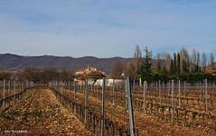 Las viñas y la Ermita (kirru11) Tags: viñas campo huertas ermita árboles montes cielo quel larioja españa anaechebarria canonpowershot