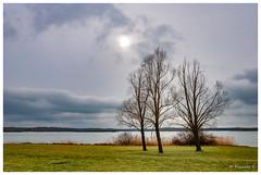 Trio d'hiver (Pascale_seg) Tags: paysage landscape river riverscape lake lac madine meuse lorraine france hiver winter tree arbre sky ciel nuage cloud gris grey