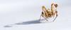 Macro Spider (ingoal18) Tags: spider spinne makro macro d7100 nikkor micro 28d af afd 105mm 105 mm nikon