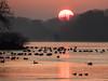 Morning Glory - Sunrise over Dove Elbe (astielau) Tags: doveelbe eis hamburg morgen sonnenaufgang tatenberg wetter