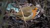 Hungry Robin (roseysnapper) Tags: olympusmzuikodigitaled75300mmf4867ii olympusomdem10ii edinburgh scotland hungry robin worm