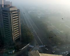 delhi morning birds (kexi) Tags: delhi india asia morning mist misty fog birds flying street canon february 2017 city buildings instantfave
