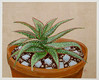Aloe with Blue Glass (M.P.N.texan) Tags: acrylic acrylics paint painting art plant aloe succulent houseplant original botanical handpainted mpn